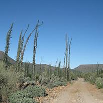The San Borja Loop