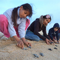 Baja Turtle Conservation